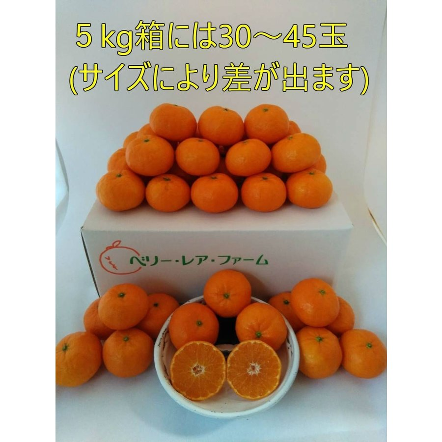【送料無料】口之津39号(5kg×2箱) shige-mikan 07