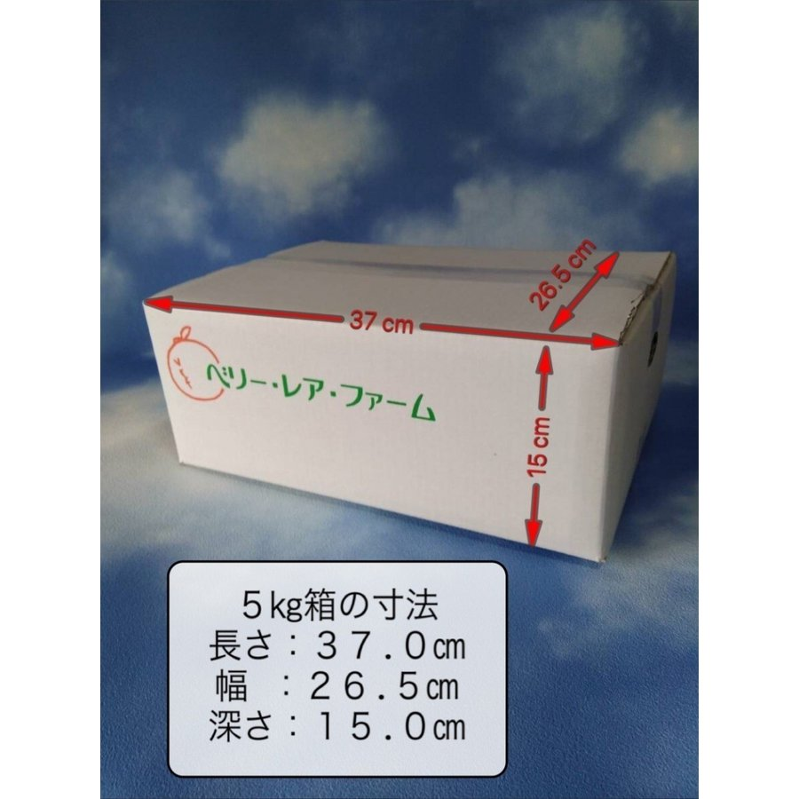 【送料無料】口之津39号(5kg×2箱) shige-mikan 08