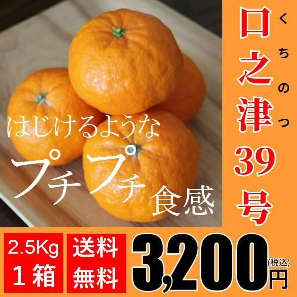 【送料無料】口之津39号(2.5kg×1箱)|shige-mikan