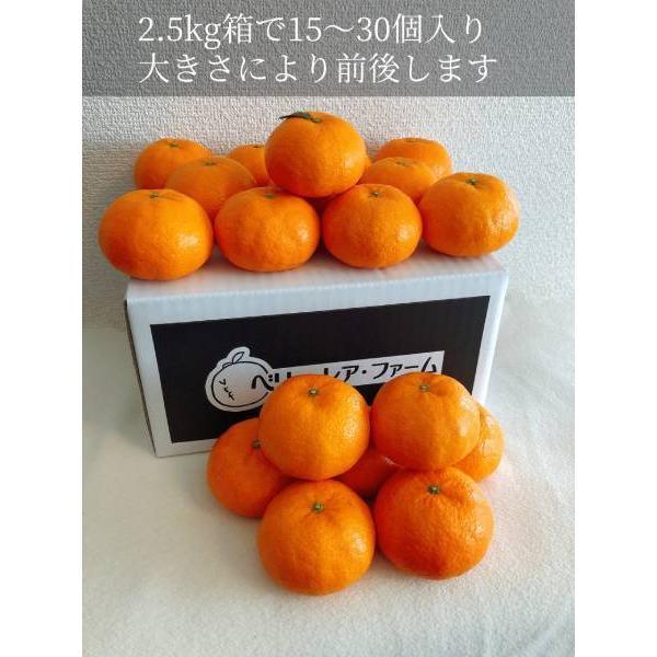 【送料無料】口之津39号(2.5kg×1箱)|shige-mikan|07