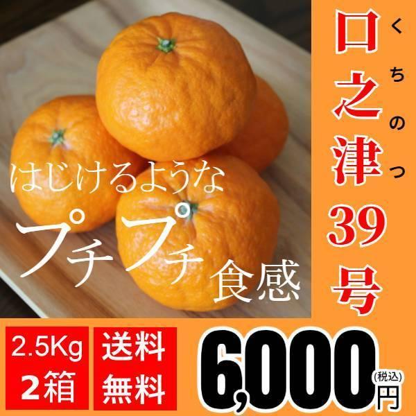【送料無料】口之津39号(2.5kg×2箱)|shige-mikan