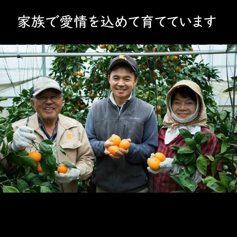 【送料無料】口之津39号(2.5kg×2箱)|shige-mikan|02