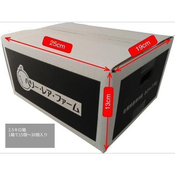 【送料無料】口之津39号(2.5kg×2箱)|shige-mikan|08