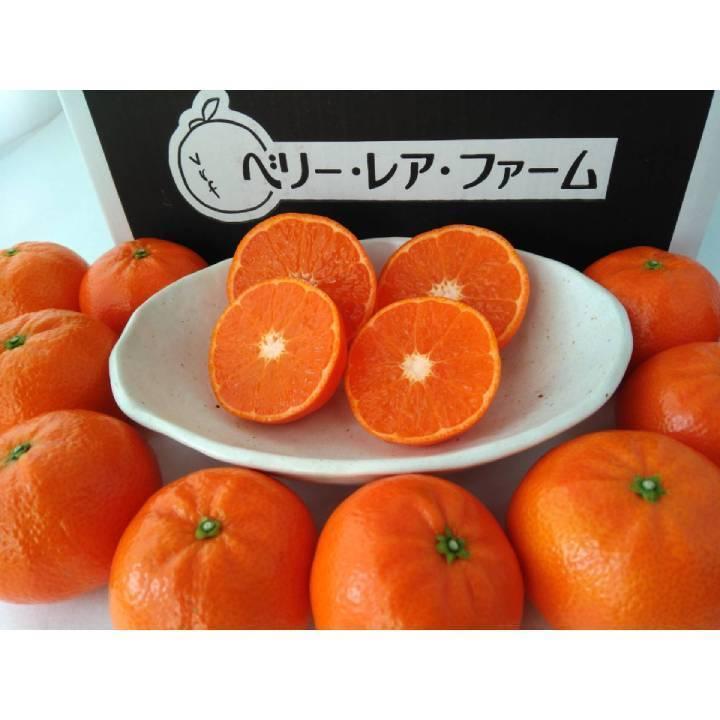 【送料無料】マーコット(5kg×1箱)|shige-mikan|04