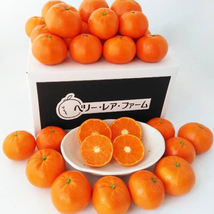 【送料無料】マーコット(5kg×1箱)|shige-mikan|05