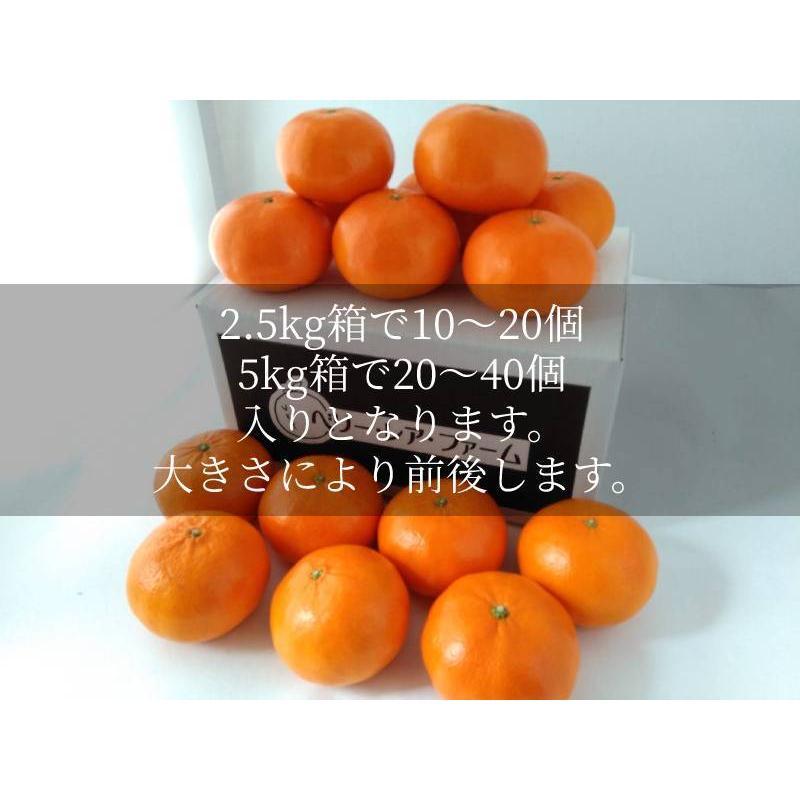 <送料無料>麗紅[れいこう](5kg×1箱)|shige-mikan|04