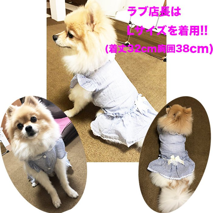 犬 服 ワンピース 春夏新作 超可愛いペット服 犬服 ワンピース ワンちゃん服 ドッグウェア 犬用のスカート 涼しい|shop-bluemoon|07
