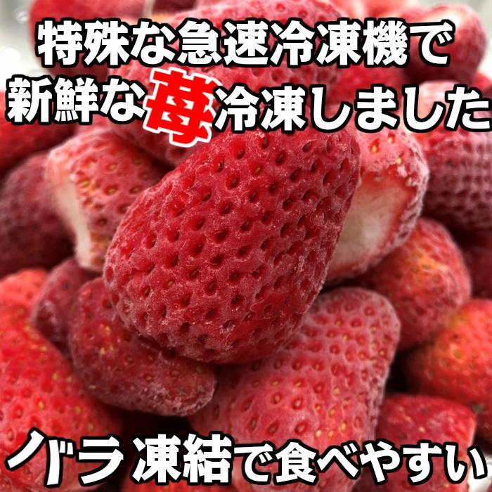 冷凍いちご ベリーツ 1kg 大分県産ブランド苺 イチゴ shop-furusato 05