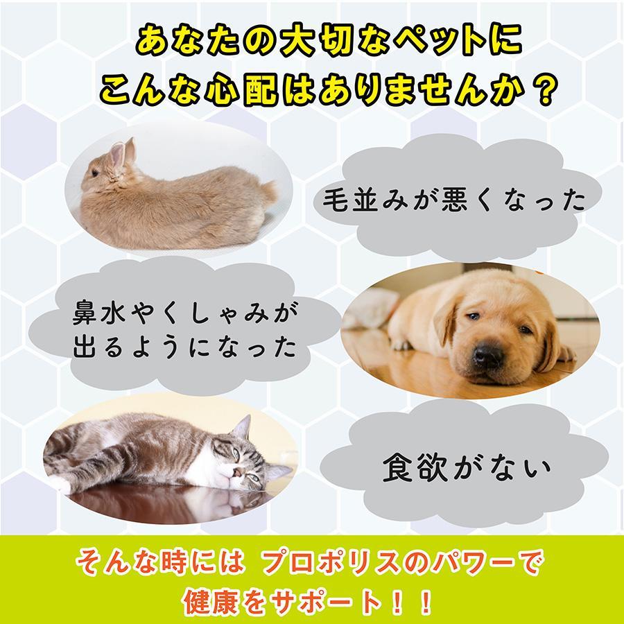 【国際品質基準認定】ビープロン beePRON プロポリス 30cc スポイトタイプ ペット用 犬用 猫用 免疫力 サプリメント 高濃度 無添加 天然 抗生物質 shop-kg2 03