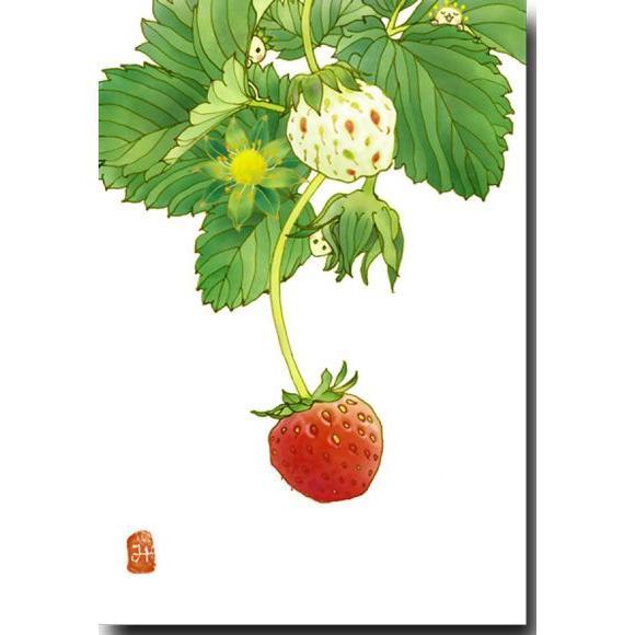 花のポストカード いちご 可愛いイラスト 絵葉書 19 1104 ポストカードと和雑貨の和道楽 通販 Yahoo ショッピング