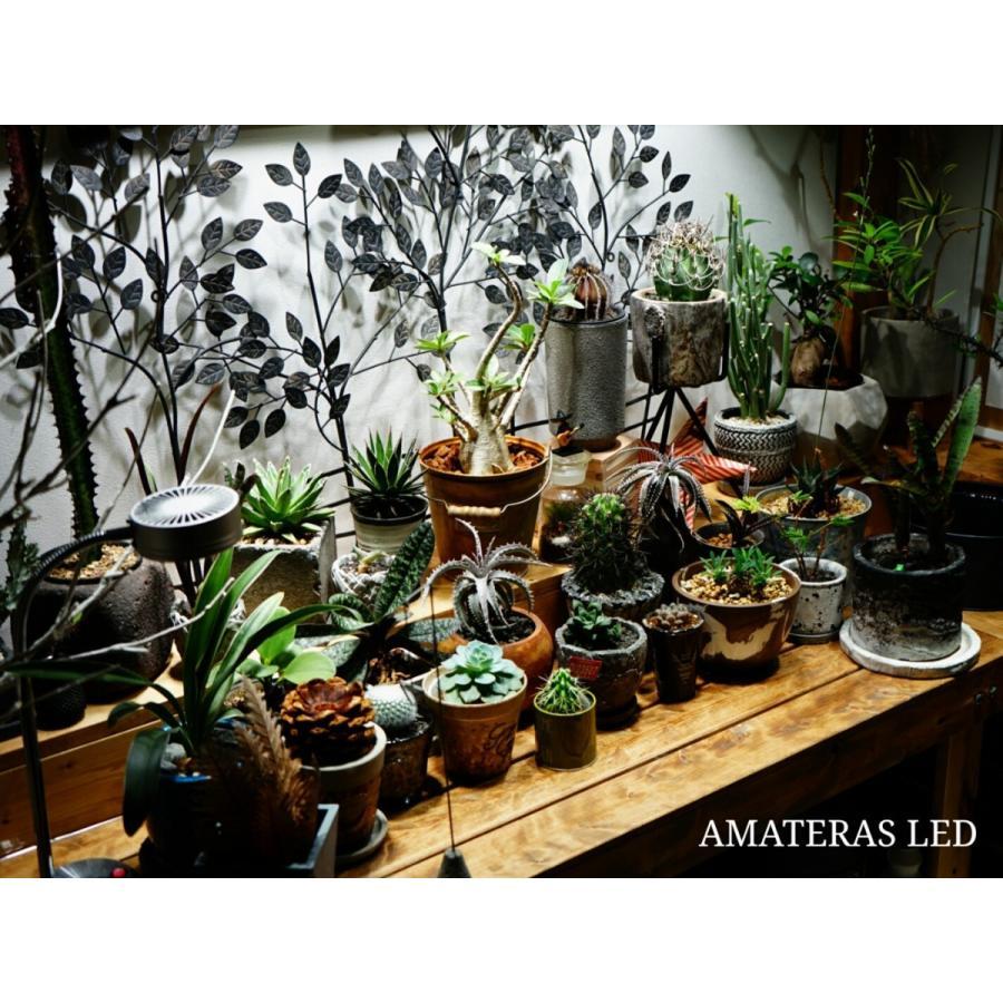 AMATERAS LED 20W 植物育成LED  太陽光LED アクアリウムLED テラリウム 室内太陽光LED ブラックボディ|shopbarrel|04