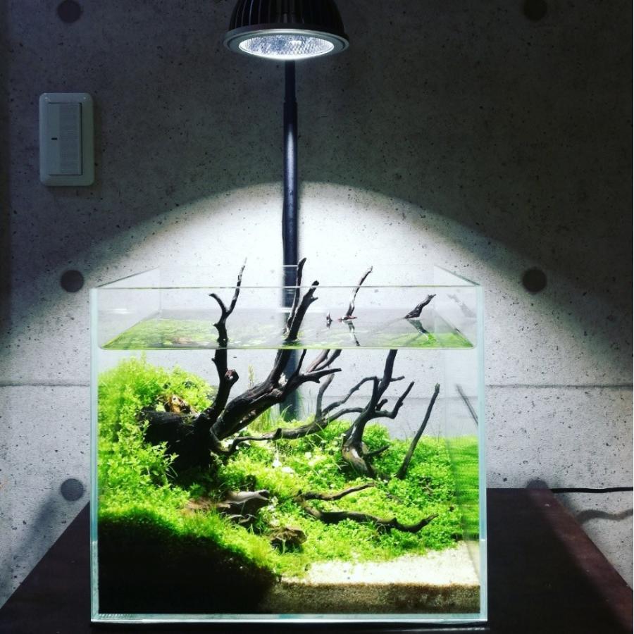 AMATERAS LED 20W 植物育成LED  太陽光LED アクアリウムLED テラリウム 室内太陽光LED ブラックボディ|shopbarrel|07
