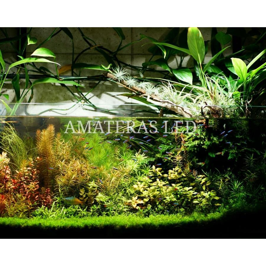 AMATERAS LED 20W 植物育成LED  太陽光LED アクアリウムLED テラリウム 室内太陽光LED ブラックボディ|shopbarrel|08
