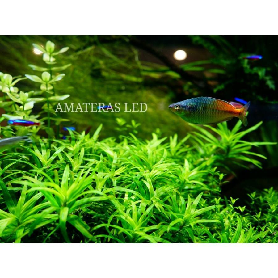 AMATERAS LED 20W 植物育成LED  太陽光LED アクアリウムLED テラリウム 室内太陽光LED ブラックボディ|shopbarrel|09