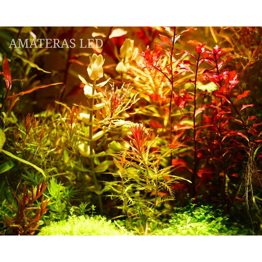 AMATERAS LED 20W 植物育成LED  太陽光LED アクアリウムLED テラリウム 室内太陽光LED ブラックボディ|shopbarrel|10