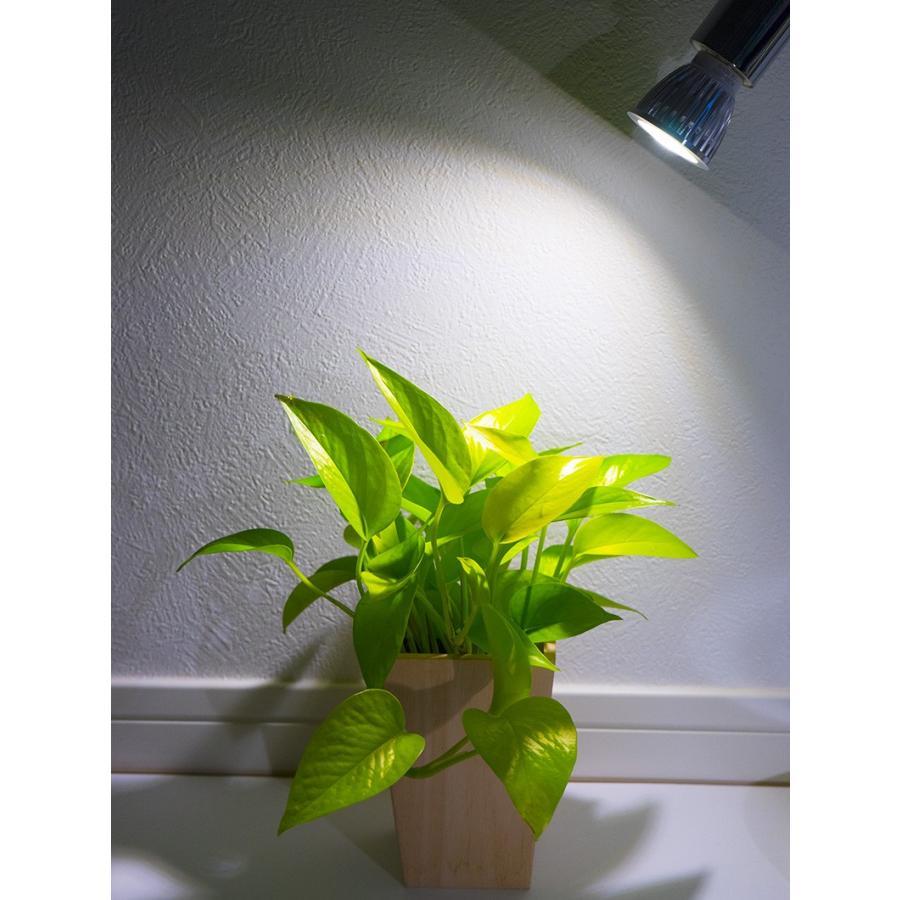 植物育成LED PlantLight5W-W 白色クリップタイプ(SUN-5W-W)+(プラントクリップB)観葉植物 植物栽培ライト アクアリウムライト E17|shopbarrel|07