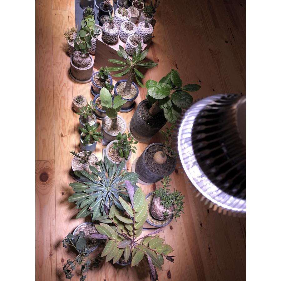 植物育成LED PlantLight18W 白色クリップタイプ(SUN-18W)+(プラントクリップA)観葉植物 植物栽培ライト|shopbarrel|09