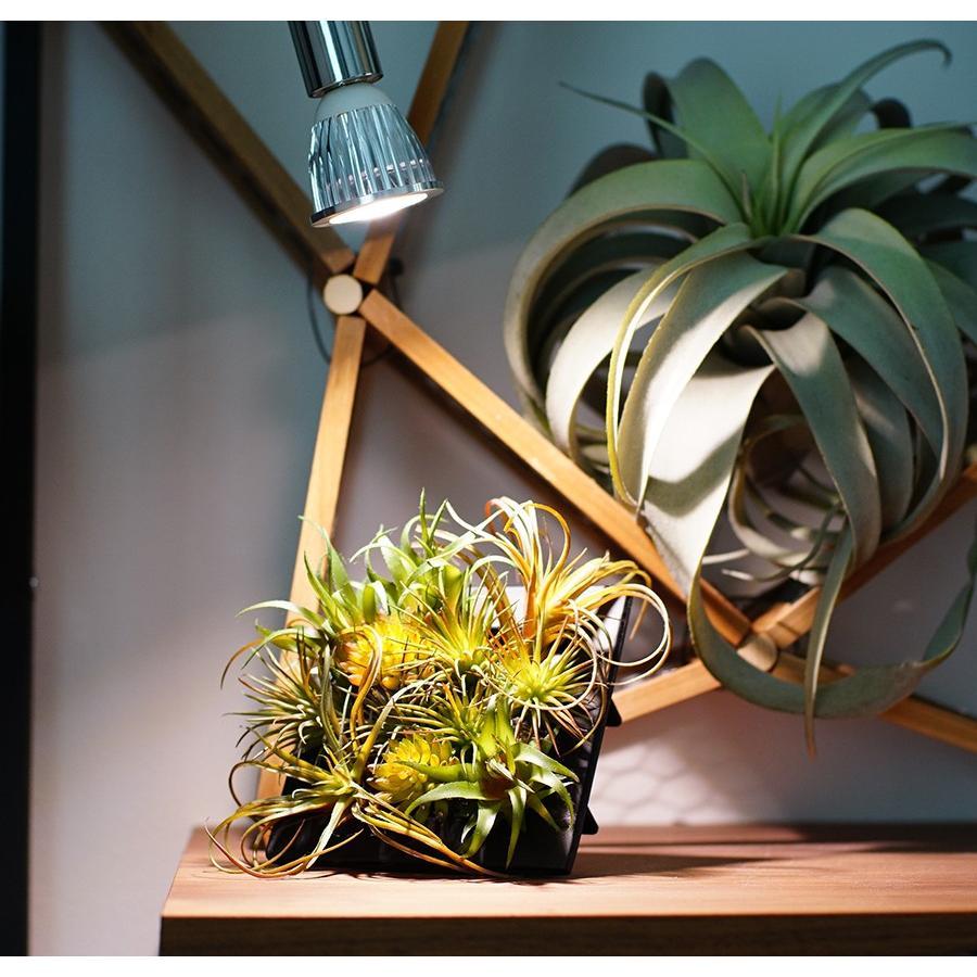 アクアリウム テラリウム 植物育成LED 口金 E17 SUN-5W-W 植物育成 (電球のみ)|shopbarrel|03
