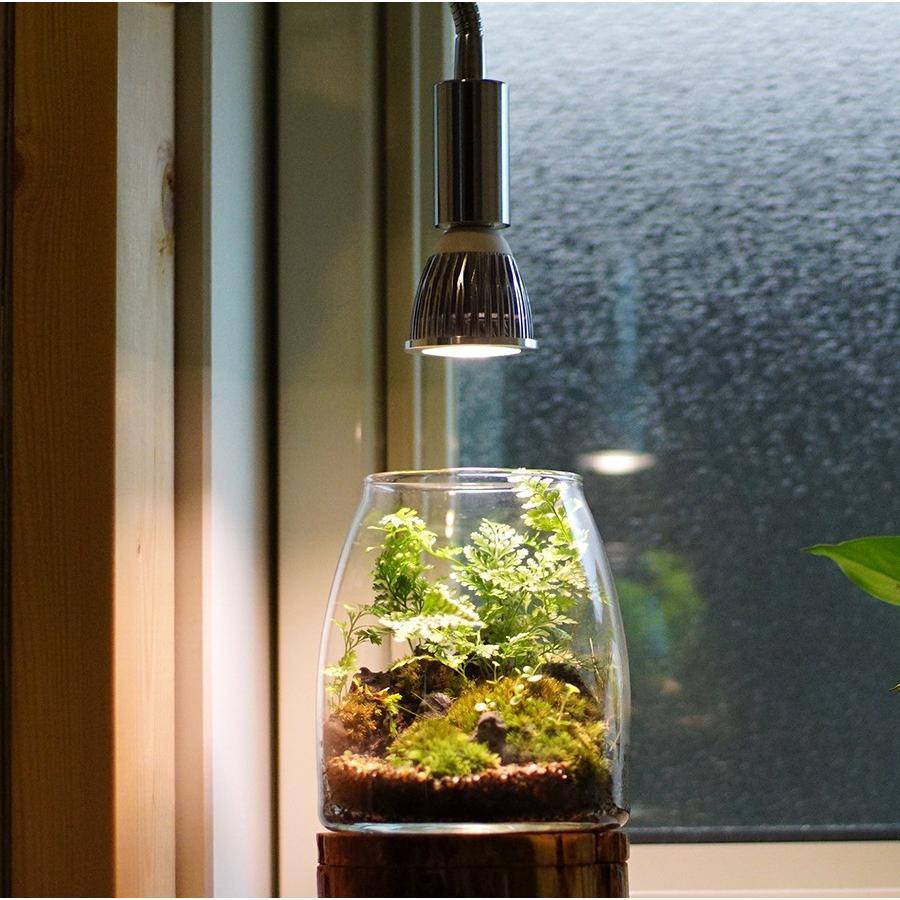 アクアリウム テラリウム 植物育成LED 口金 E17 SUN-5W-W 植物育成 (電球のみ)|shopbarrel|07