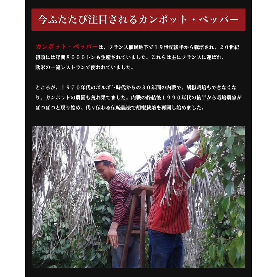 カンポット・ペッパー 生胡椒 40g 1袋 ゆうパケット送料無料 shougakoubou 04