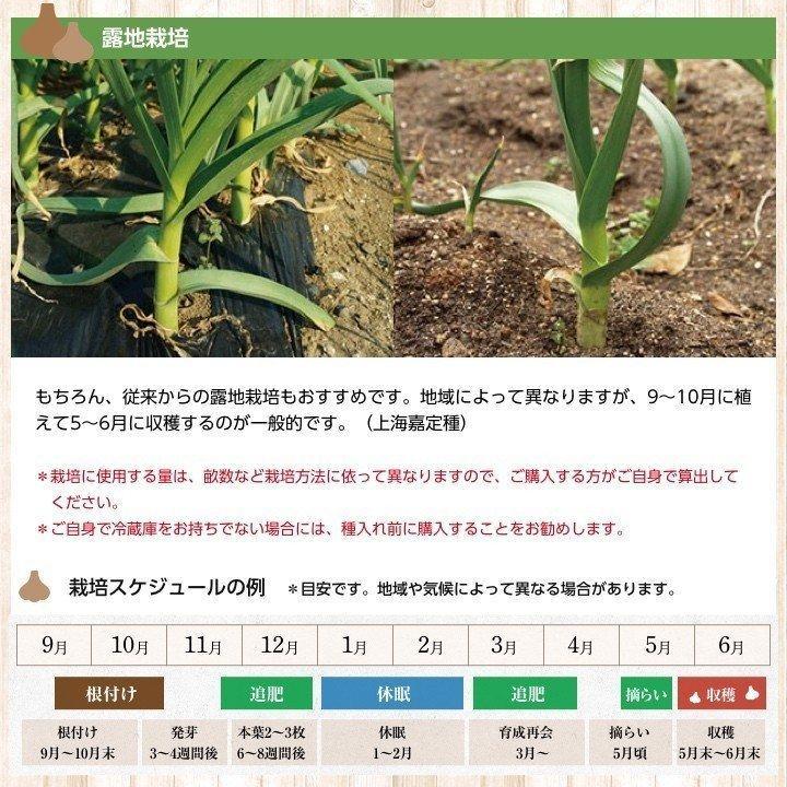 【完売御礼】嘉定種ホワイト バラシにんにく 1kg×10ネット 中国産 shougakoubou 06