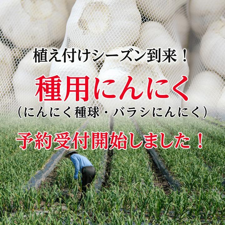 【完売御礼】金郷種ホワイト にんにく種球 1kg×10ネット 中国産 shougakoubou 02