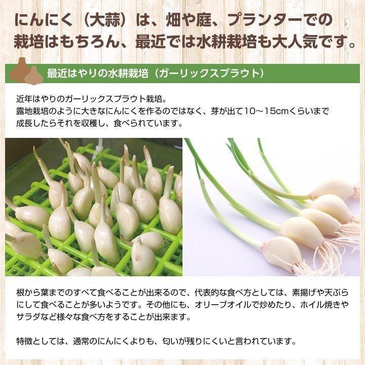 【完売御礼】金郷種ホワイト にんにく種球 1kg×10ネット 中国産 shougakoubou 04