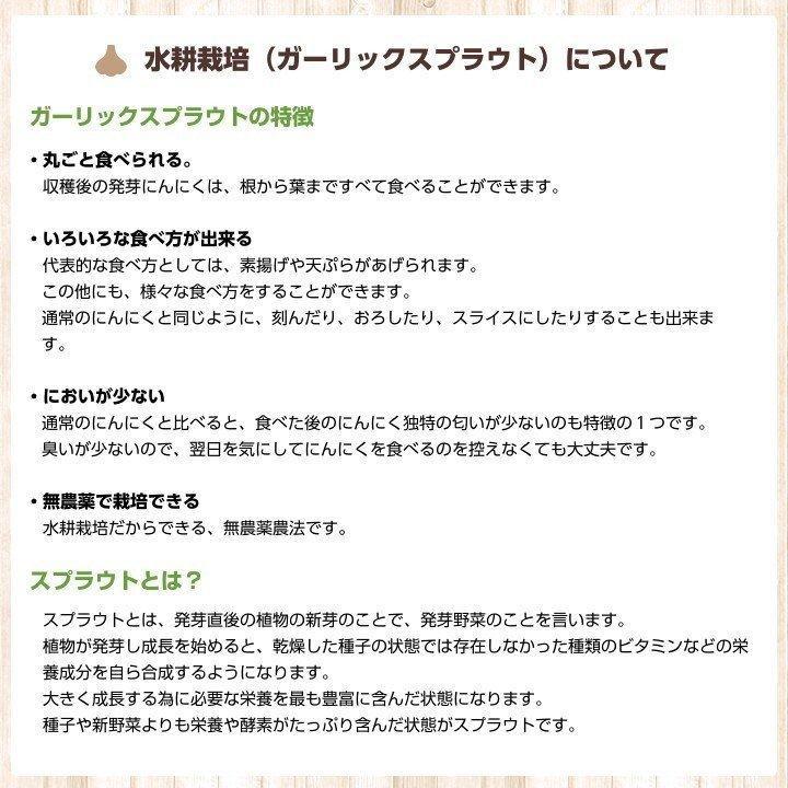 【完売御礼】金郷種ホワイト にんにく種球 1kg×10ネット 中国産 shougakoubou 05