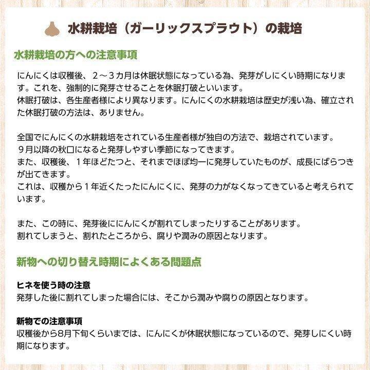 【完売御礼】金郷種ホワイト にんにく種球 1kg×10ネット 中国産 shougakoubou 06