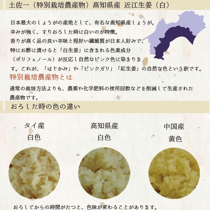 食用 高知県産近江生姜(白)10kg|shougakoubou|02