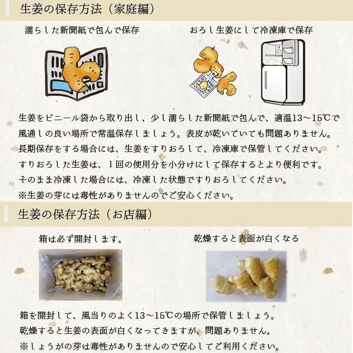 食用 高知県産近江生姜(白)10kg|shougakoubou|03