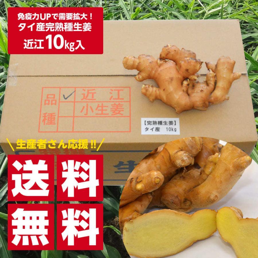 【完売御礼】【種生姜】タイ産 完熟種生姜(近江生姜 白)10kg|shougakoubou