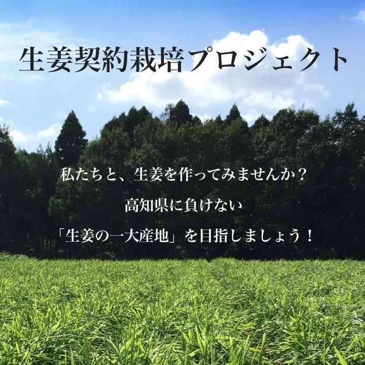【完売御礼】【種生姜】タイ産 完熟種生姜(近江生姜 白)10kg|shougakoubou|11