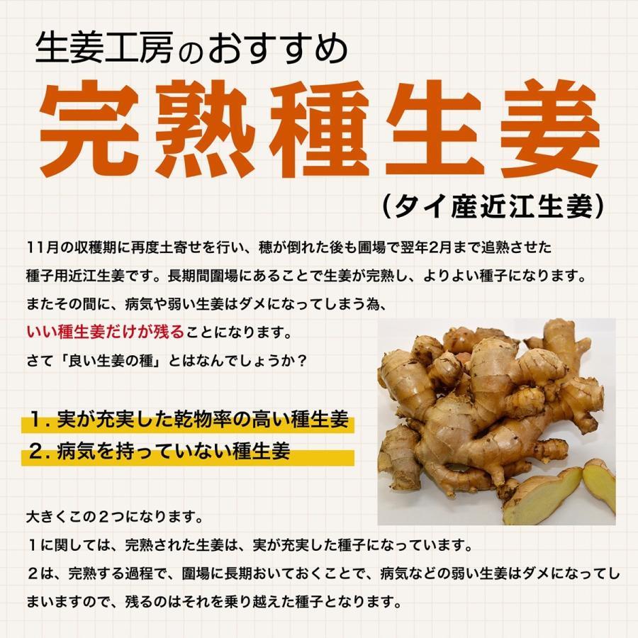 【完売御礼】【種生姜】タイ産 完熟種生姜(近江生姜 白)10kg|shougakoubou|03