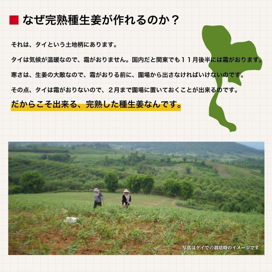 【完売御礼】【種生姜】タイ産 完熟種生姜(近江生姜 白)10kg|shougakoubou|05