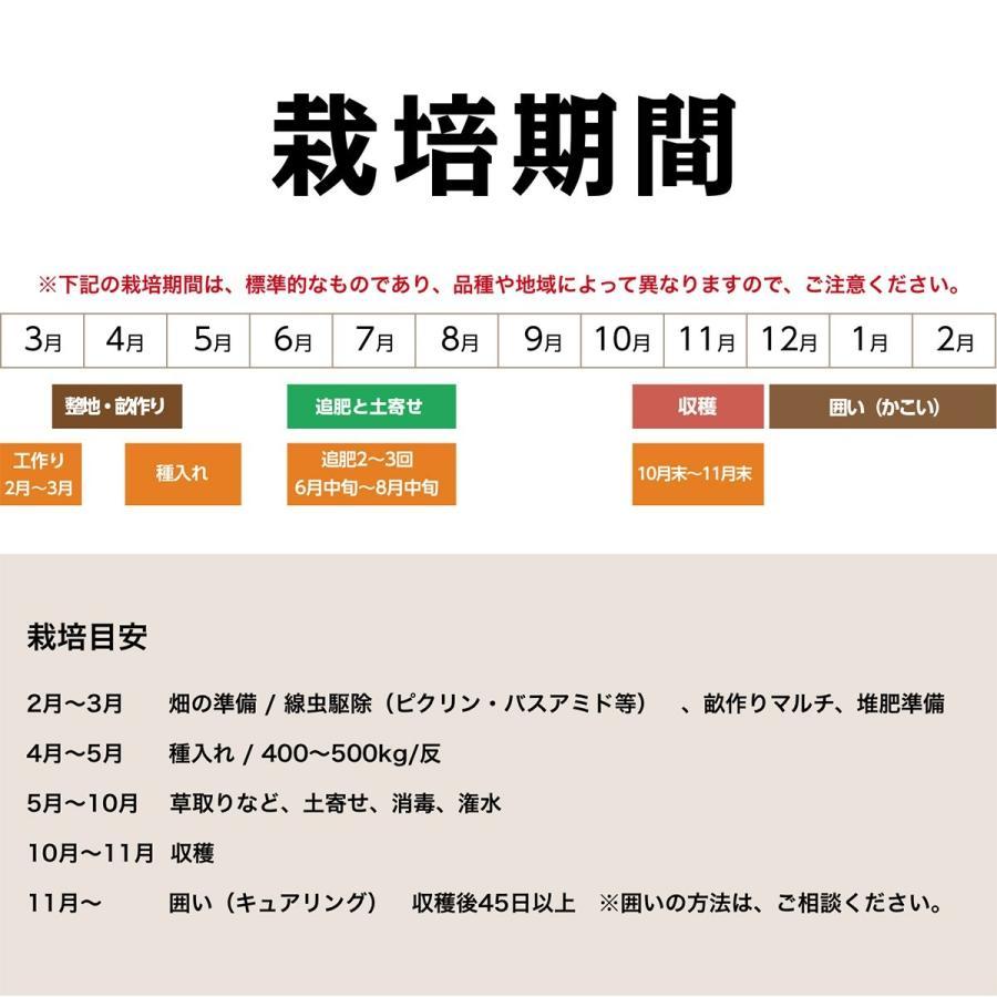 【完売御礼】【種生姜】タイ産 完熟種生姜(近江生姜 白)10kg|shougakoubou|08