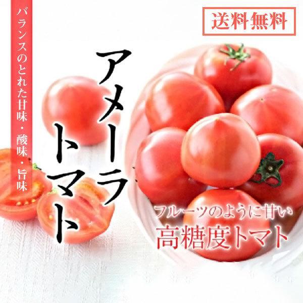 ギフトに最適! 高糖度トマト アメーラ フルーツトマト 15玉から18玉入り 送料無料|shunsaiya-store