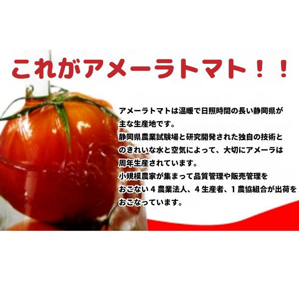 ギフトに最適! 高糖度トマト アメーラ フルーツトマト 15玉から18玉入り 送料無料|shunsaiya-store|03