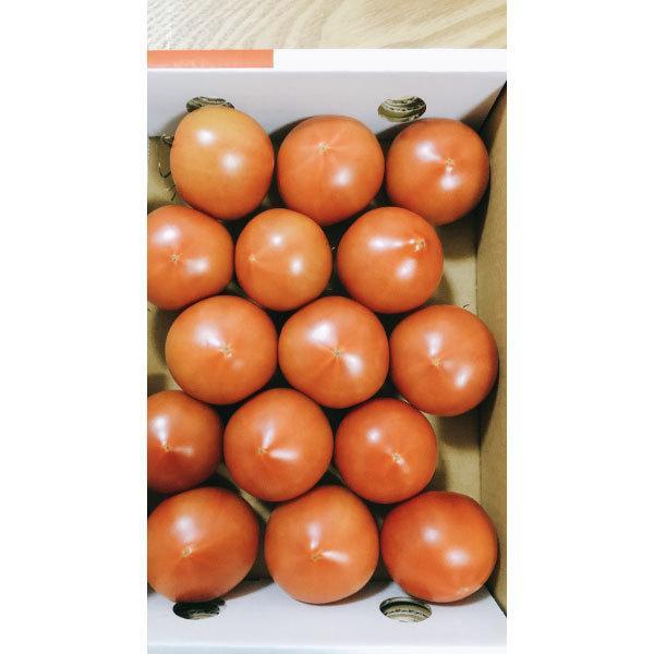 ギフトに最適! 高糖度トマト アメーラ フルーツトマト 15玉から18玉入り 送料無料|shunsaiya-store|05