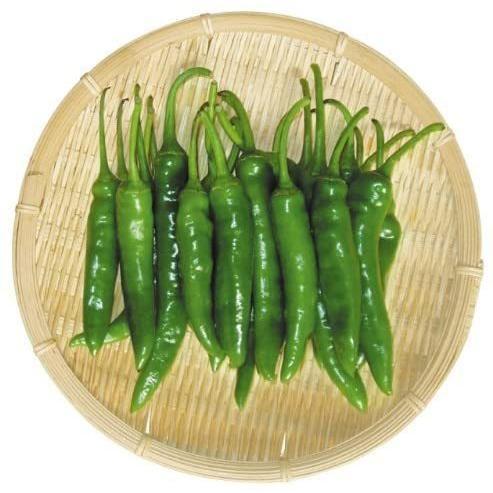 送料無料クール便 韓国直輸入 辛い青唐辛子 交換無料 野菜 韓国食品 全店販売中 1kg