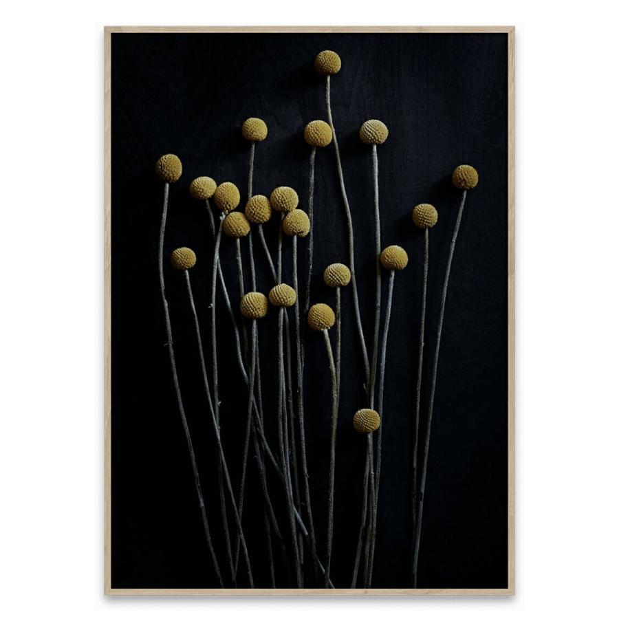 【激安】 ペーパーコレクティブ ポスターSTILL LIFE 01 LIFE ポスター 50cm×70cm 50cm×70cm/ PAPER/ COLLECTIVE, Casanova:3ecb34a5 --- grafis.com.tr