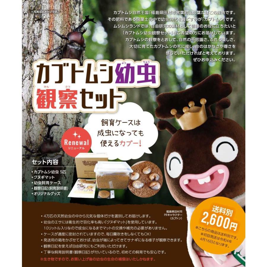 カブトムシ幼虫観察セット/自由研究/天然/カブト虫/ムシムシランド|sky-palace-tokiwa|04