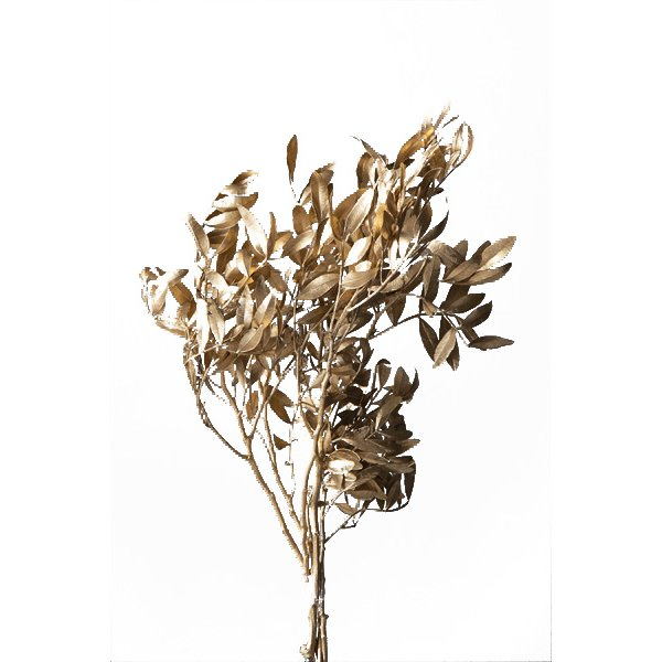 プリザーブドフラワー 花材 直営ストア ピスタチアリーフ ご予約品 ゴールド 秋冬 大地農園 ペイント 小分け
