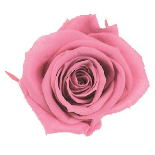 プリザーブドフラワー 注目ブランド 花材 メディアナローズ チェリーブロッサム 小分け フロールエバー バラ 大きい 1輪 送料無料 一部地域を除く
