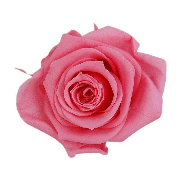 プリザーブドフラワー 花材 メディアナローズ 超激得SALE シュガーピンク 小分け フロールエバー 大きい 1輪 バラ 年中無休