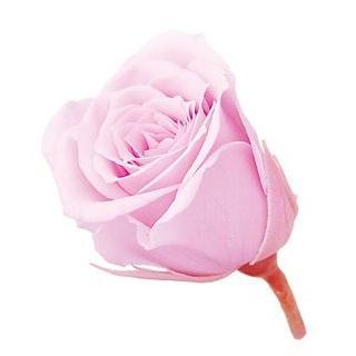 プリザーブドフラワー 花材 バラ ビビアン シャーベットピンク 1輪 新作アイテム毎日更新 大地農園 上質 小分け 小さい ローズ