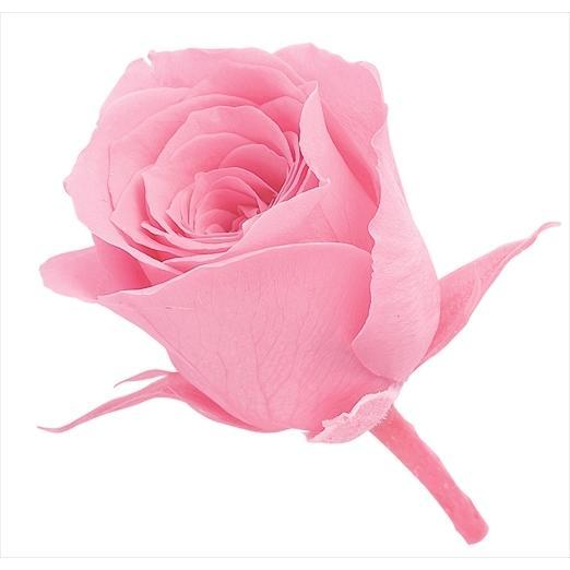 蔵 プリザーブドフラワー 花材 ビビアン ローズ プリンセスピンク 小分け ピンク 1輪 大地農園 バラ バラ売り 在庫処分