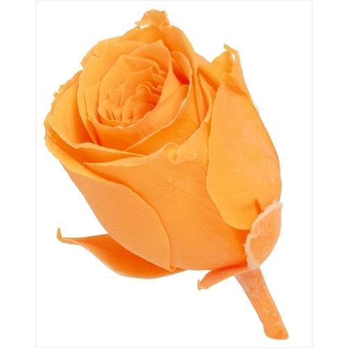 プリザーブドフラワー 花材 ビビアン ローズ 低価格化 フルーティーオレンジ 小分け 信託 1輪 大地農園 オレンジ バラ バラ売り