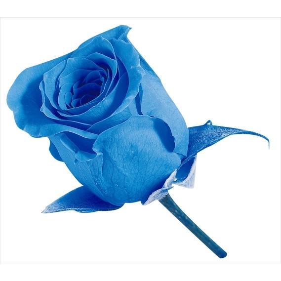 プリザーブドフラワー 花材 ビビアン ローズ ソーダブルー 小分け ブルー 大地農園 バラ 1輪 青 バラ売り アウトレット 安売り