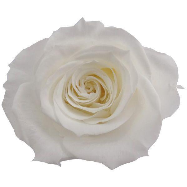 人気 プリザーブドフラワー花材 大決算セール 材料 いずみ ローズ 1輪入 小分け 大地農園 ピュアホワイト